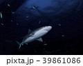 バハマにてサメ 39861086