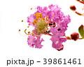 開花 花 植物の写真 39861461