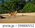 わんこ 犬 ビーチの写真 39866552