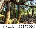 高森殿の杉 杉 巨木の写真 39870098