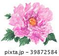 花 牡丹 ピンクのイラスト 39872584
