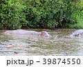 セレンゲティ国立公園 39874550