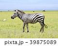 動物 野生動物 陸上動物の写真 39875089