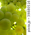 Close Up Macro of Ripe Grape Cluster on Vine 39880516