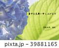 暑中見舞い素材(紫陽花) 39881165