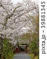常照寺と桜 39881345