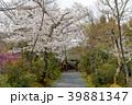 常照寺と桜 39881347