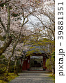 常照寺と桜 39881351