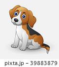 Cute dog sitting isolated on white background 39883879