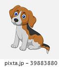 Cute dog sitting isolated on white background 39883880