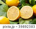 レモン 39892383