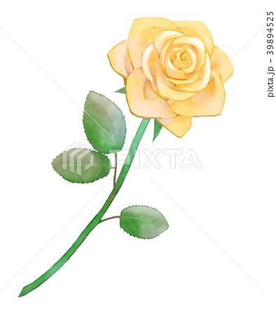 薔薇 黄のイラスト素材