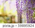 植物 花 藤の写真 39895924