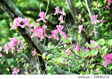 春の山花 39896219