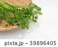 芹 野菜 香味野菜の写真 39896405