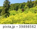 長谷寺 新緑 寺院の写真 39898562