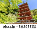 長谷寺 新緑 寺院の写真 39898568