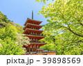 長谷寺 新緑 寺院の写真 39898569