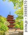 長谷寺 新緑 寺院の写真 39898570