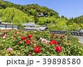 長谷寺 新緑 寺院の写真 39898580