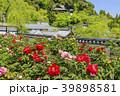 長谷寺 新緑 寺院の写真 39898581