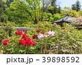 長谷寺 新緑 寺院の写真 39898592