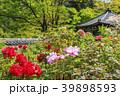長谷寺 新緑 寺院の写真 39898593