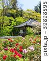 長谷寺 新緑 寺院の写真 39898595