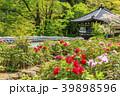 長谷寺 新緑 寺院の写真 39898596