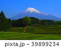 富士市大淵笹場の茶畑と富士山 2018/04/20 39899234
