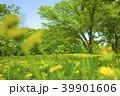 公園 森 自然の写真 39901606