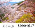 吉野山 桜 春の写真 39904617
