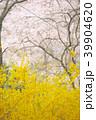 吉野山 春 風景の写真 39904620
