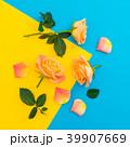 花 芽ぶき オレンジの写真 39907669