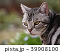 庭の猫 アップ 39908100