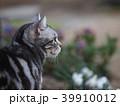 庭の猫 横向きアップ 39910012