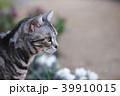 花と猫 横向きアップ 39910015