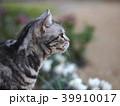 庭の猫 横向きアップ 39910017