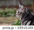 庭の猫 横顔アップ 39910160