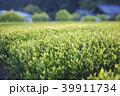 朝の茶畑 39911734