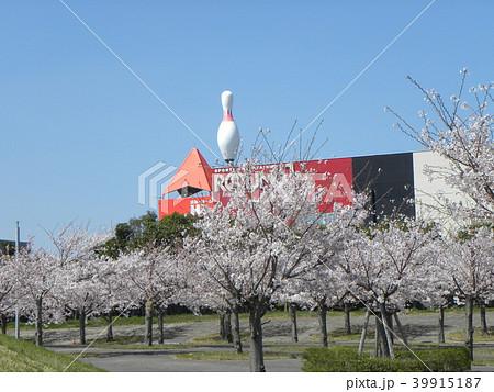 ソメイヨシノの薄桃色のサクラの花 39915187