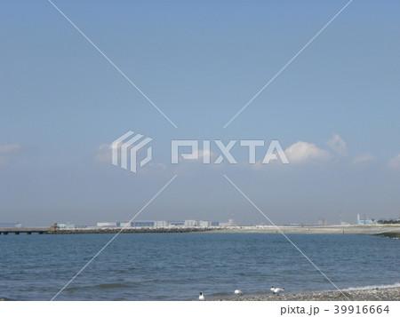 ユリカモメのいる海岸からみる青い空と白い雲 39916664