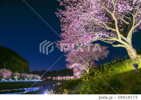 みなみの桜と菜の花まつり ライトアップ 39919573
