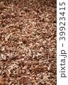 落ち葉 落葉 秋の写真 39923415