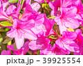つつじ 躑躅 花の写真 39925554