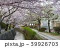 哲学の道 春 花の写真 39926703