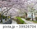 哲学の道 春 花の写真 39926704