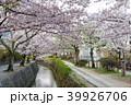 哲学の道 春 花の写真 39926706