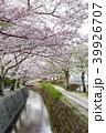 哲学の道 春 花の写真 39926707