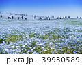 花畑 ネモフィラ みはらしの丘の写真 39930589